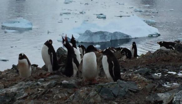 昂首呼喊的企鵝——劃破南極大陸的寂靜卻更顯寂靜