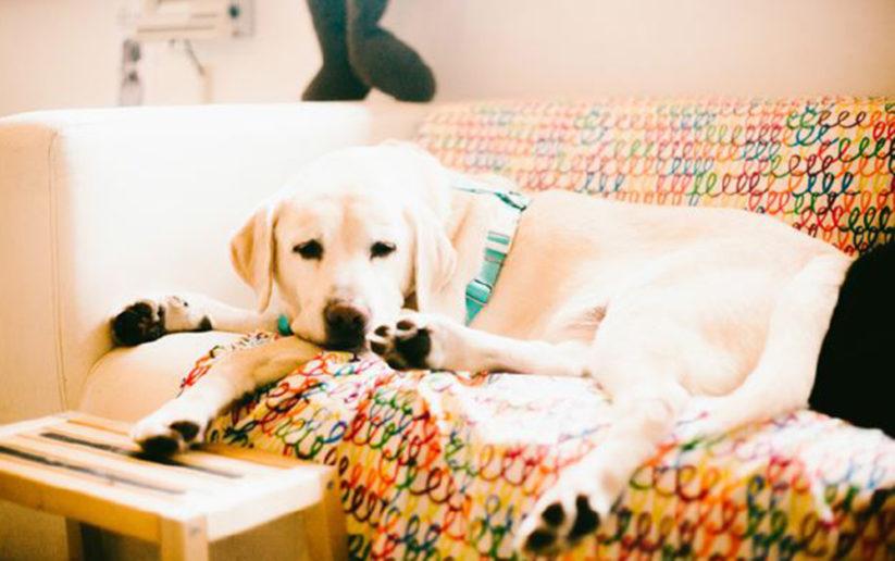 看著北歐寵物旅館店狗 Level 慵懶可愛的睡顏,林清盛說協助訓練和送養流浪狗狗是目前自己比較想做的。(圖片授權/小日子享生活誌)